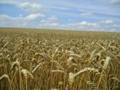 Spielsucht-Therapie – anhand von fünf Faktoren trennt sich die Spreu vom Weizen